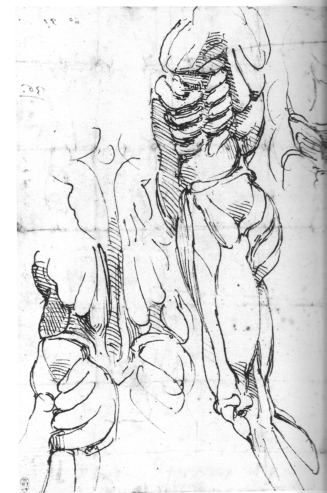 Anatomy Michelangelo Drawing Blood